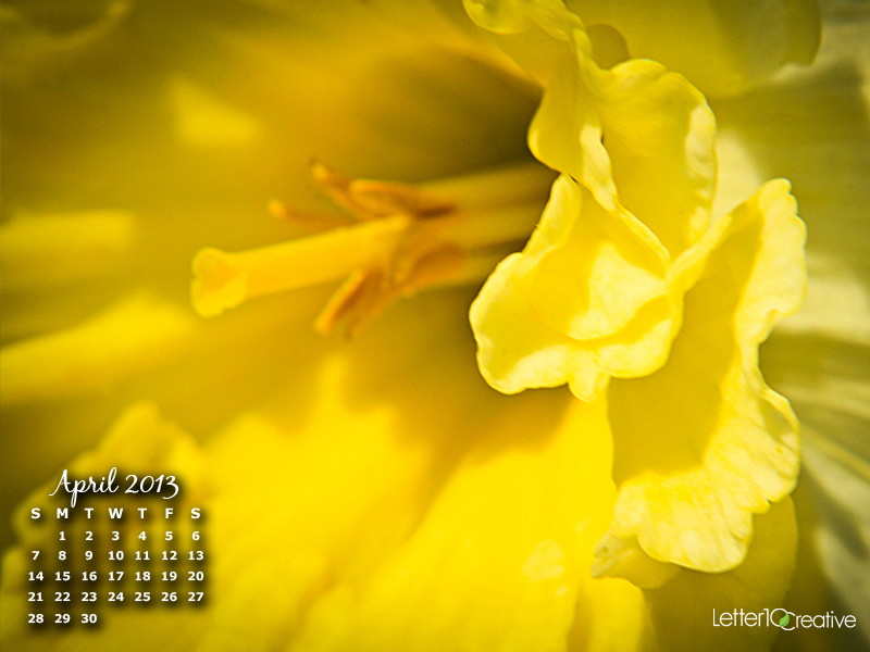 Free April 2013 Daffodil Desktop Calendar Download by Letter10 Creative of Vermont
