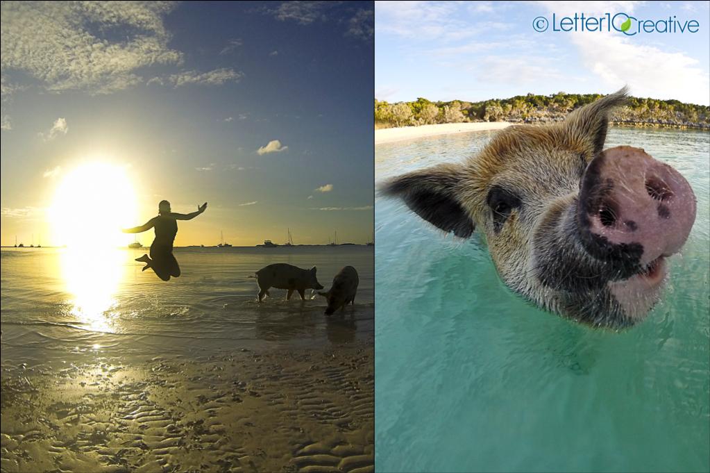 Bahamas Sailing Trip Pigs at Big Major Spot