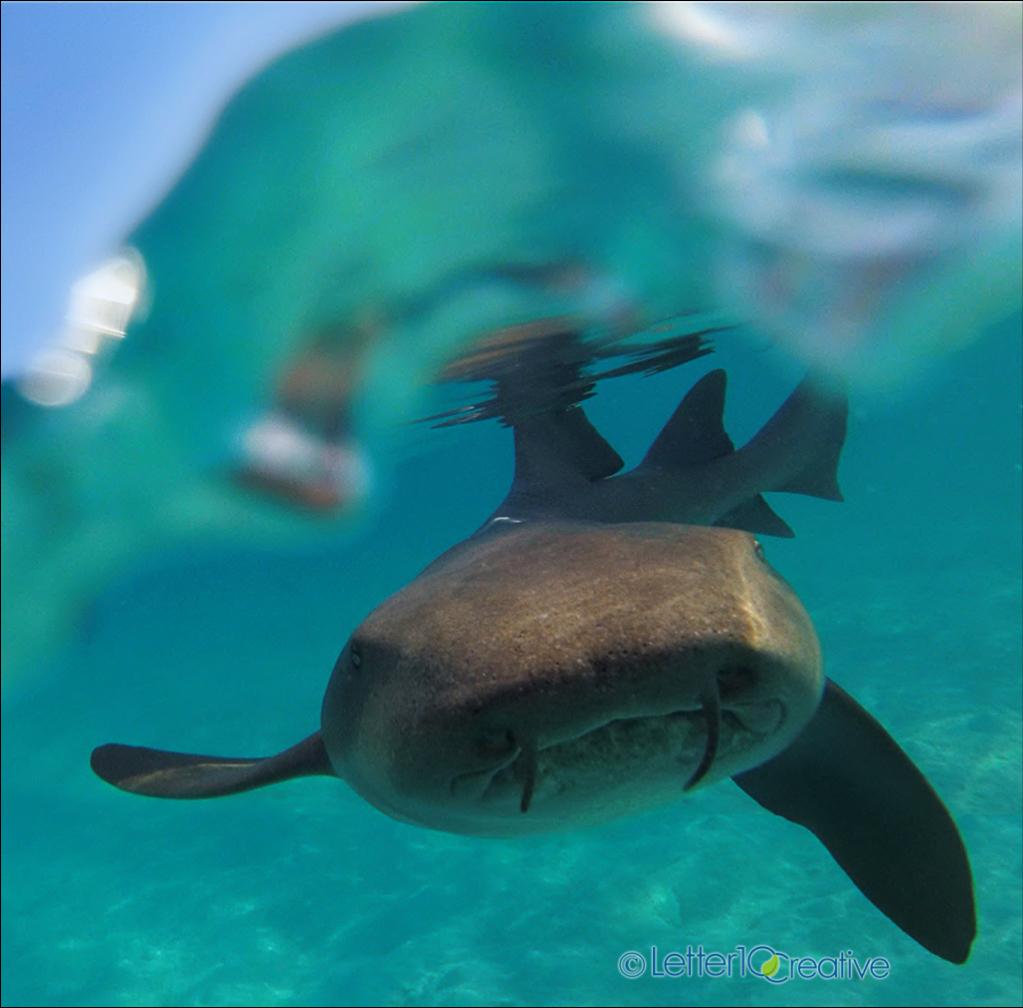 Bahamas Sailing Trip Nurse Shark