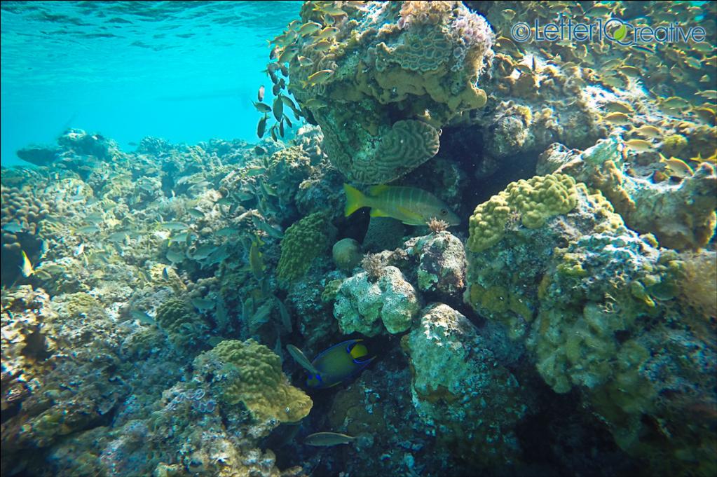Bahamas Sailing Trip Reef Snorkeling