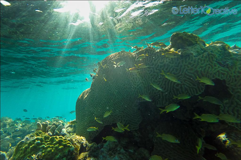 Bahamas Sailing Trip Snorkeling in Reef