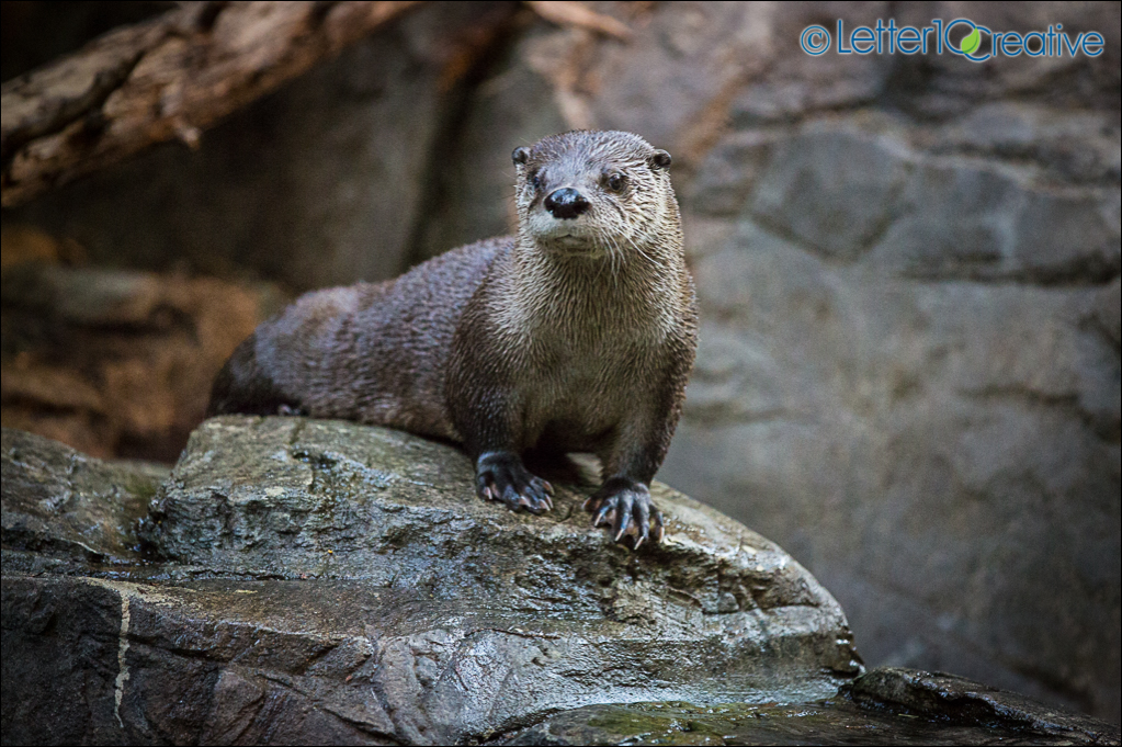 Montreal Biodome Otter by Letter10 Creative