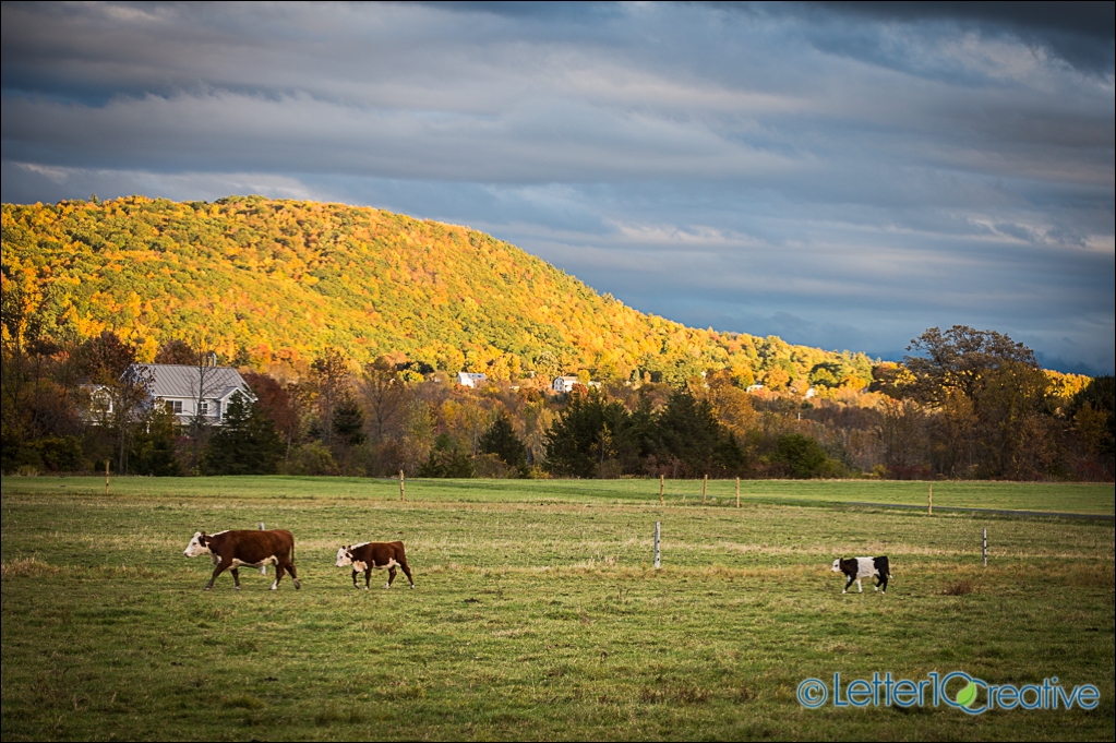 Fall in Vermont Project Charlotte by Vermont Photographer Letter10 Creative