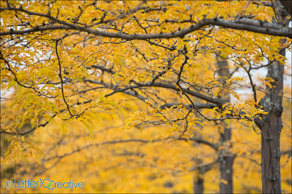 Fall in Vermont Project by Vermont Photographer Letter10 Creative