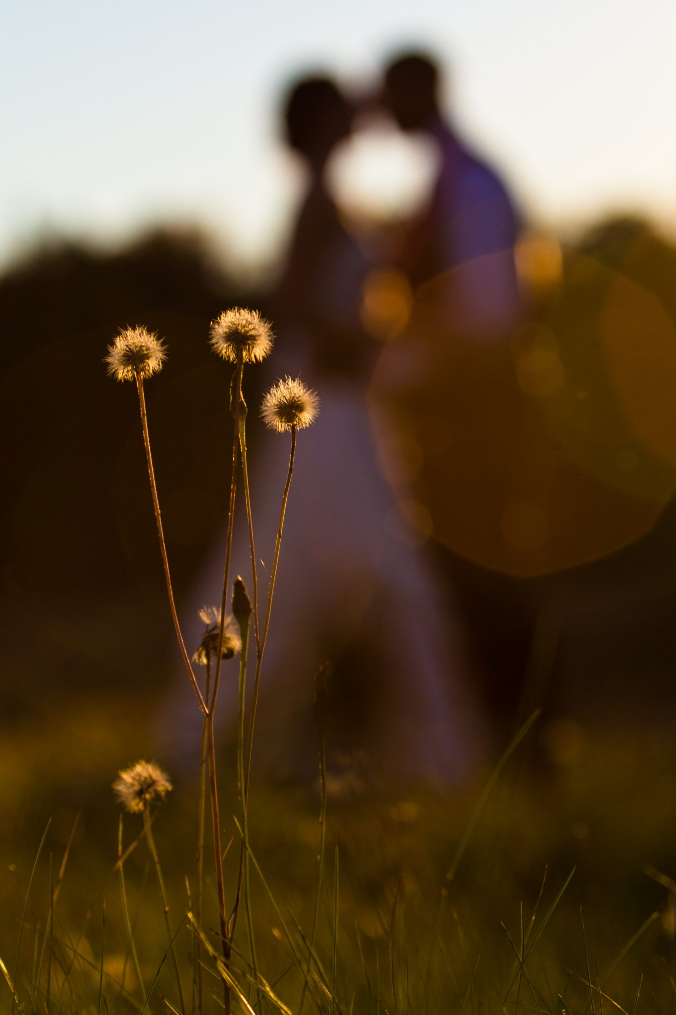 Golden hour light creative shot of flowers and portrait of couple in background in Vermont